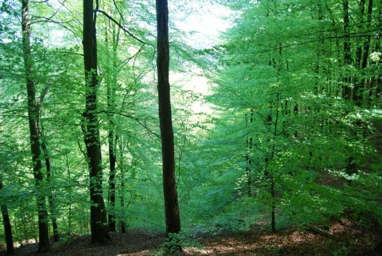25.4.2021 Im Wald verlaufen?